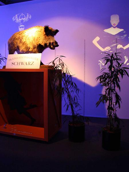 Salzburg-Cityguide - Foto - 029_wuedrara_L.jpg