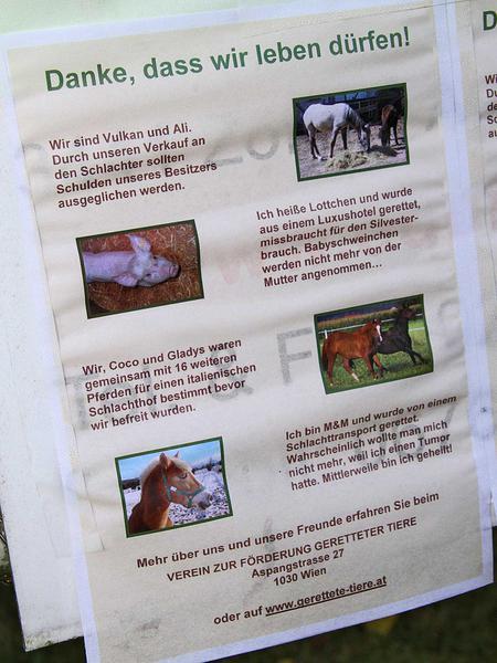 Salzburg-Cityguide - Foto - happys farm niemetz