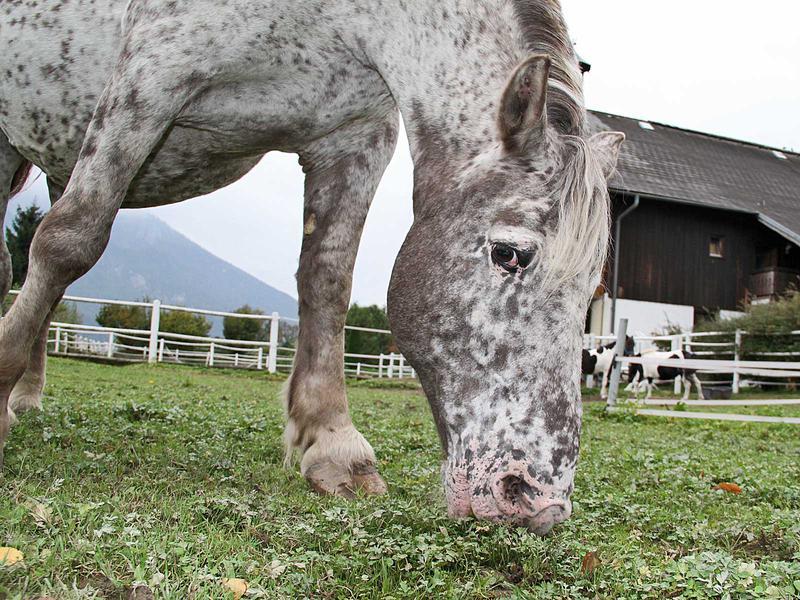 Salzburg-Cityguide - Foto - 12_10_01_happysfarm_uwe_001.jpg