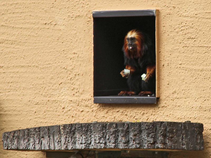 Salzburg-Cityguide - Foto - 13_08_29_artenschutz_fux_uwe_001.jpg